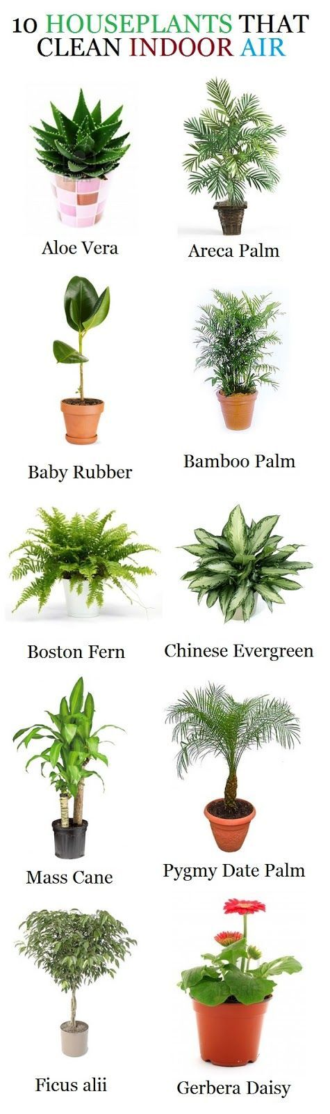 indoor-plants-clean-air.jpg